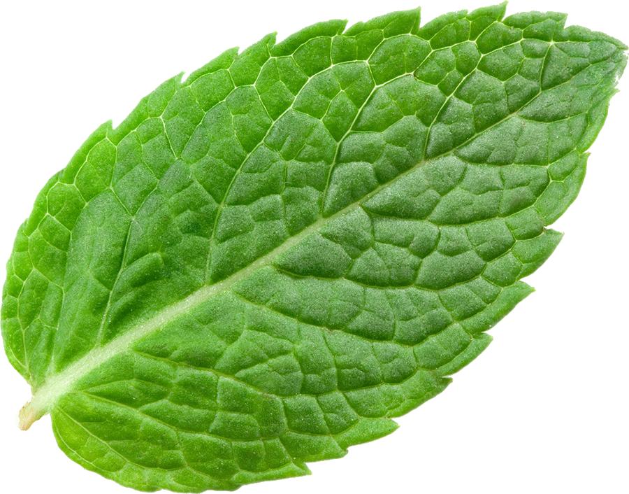 Image result for mint